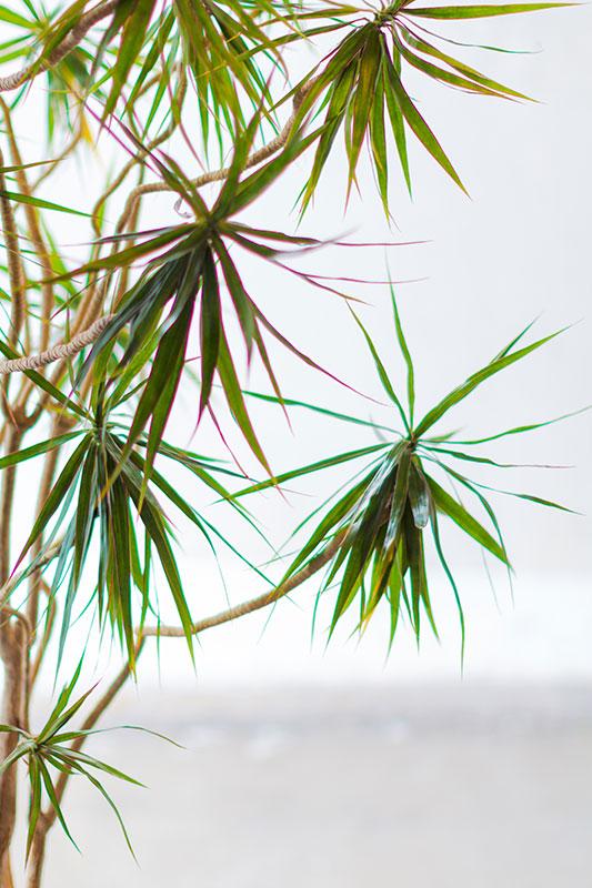 Palm Trees Therapeutic Massage